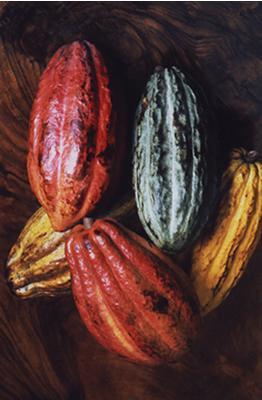 Raw Cacao has manifold health benefits