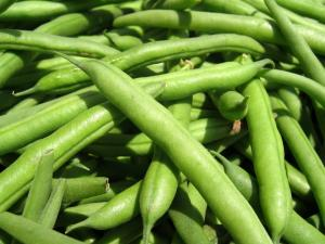 Seasons - Beans