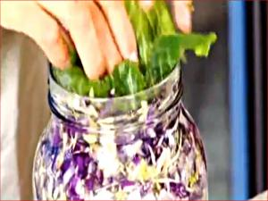 Raw Sauerkraut - Benefits of Probiotics - Part 2