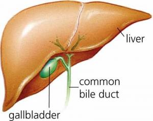 Herbal remedies for gall bladder