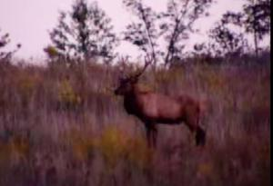 How To Hunt Kentucky Bull Elk