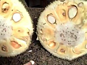 Tali and Jackfruit Part 1 Raw Naked Food