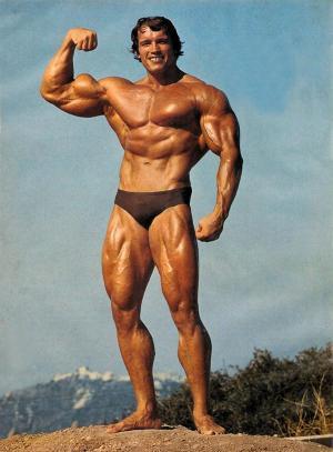 Body builder Arnold