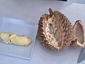 Tali and Durian Part I: The King of all Fruits