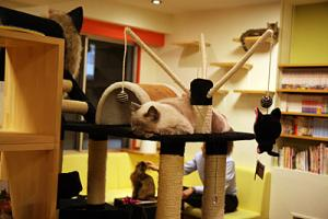 cat cafes are popular in Tokyo