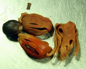how to eat nutmeg?- Powder, Pulverize or Grate