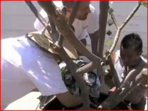 Urban Garden - Transplanting a Plumeria Tree