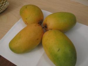 Kesar Indian Mango