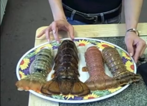Four Types of Lobster Tails in the Lobster Gram Test Kitchen