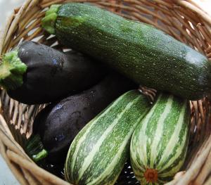 Seasons - Zucchini
