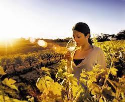 Australia Wine Tour