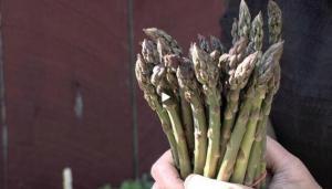 Nutrition: Asparagus