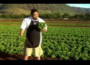 Manoa Lettuce Review