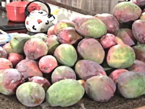 Mangos are Poison? Mangos and Food Safety