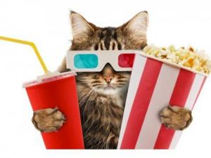 London Could Be Getting The Worlds First Cat Cinema