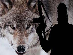 Are Lone Wolf Terrorist Attacks On The Rise Because Of Isis