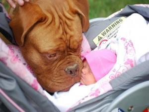 Dogs Meet New Born