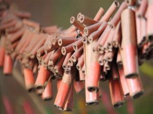 717643 Illegal Fireworks Cross European Border For New Years