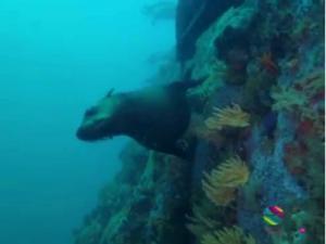 Seals False Bay