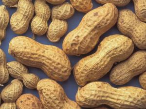 Eating Peanut At An Early Age Prevents Peanut Allergy