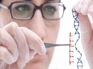 Human Genome Editing Banned By Scientists Over Safety Concerns