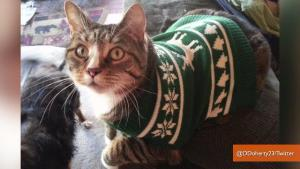 38 Cats Who Make Ugly Christmas Sweaters Cute