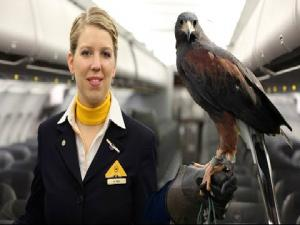 Lufthansa Welcomes Falcons On Planes