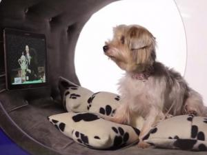 Samsung Unveils 30000 Dream Doghouse