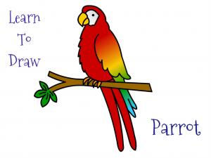 Draw A Parrot