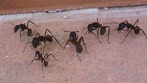How To Handle Ants 10023962 By Videojug