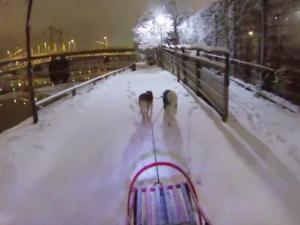 Man Takes Dogs Snowsledding