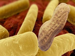 Thelip Antibiotics And Food