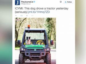 Fur Real Dog Crashes Tractor On Scottish Highway