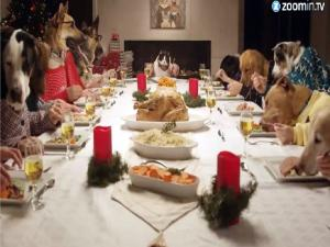 Pets Dressed As Humans Celebrate Christmas Dinner