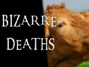 Bizarre Deaths