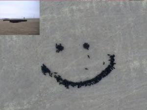 Farmer Uses Feed And Drones To Create Amazing Cow Art