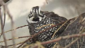 How To Learn Hatching Quail Eggs 10024598 By Videojug
