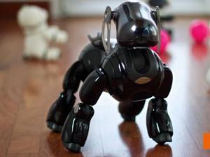 Funerals Held For Robotic Dogs In Japan