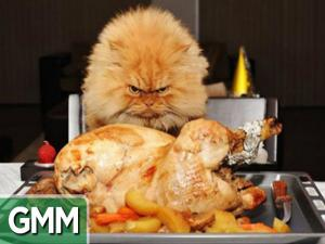 Cat Hair Thanksgiving Dinner