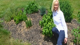 Betty's Herb Garden Update, June 17, 2015