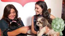Rachael Ray's Tips For A Dog-Friendly Party