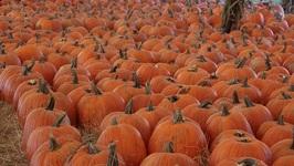 Pumpkin Festival Hunsader Farms