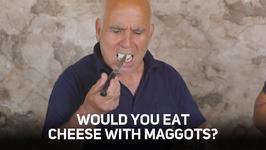 Maggot munching a Sardinian cheese secret