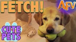 Cute Pets Play Fetch