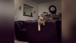 Cat Is Done Hitting Balloon