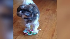Dog Almost Gets A Present