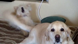 Dog Introduced To Tail