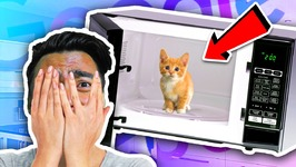 Can You Microwave A Cat - Google Feud