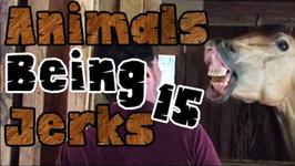 Animals Being Jerks -15