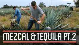 Harvesting Agave (23)  How to Brew Everything Mezcal and Tequila